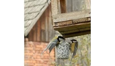 Prikrmovanie vtáctva