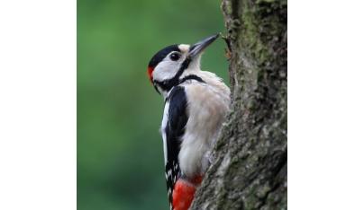 Vtáctvo našich lesov, časť 5