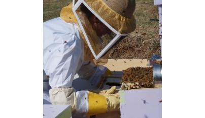 Zazimovanie včelstiev