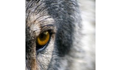 Geneticky najkvalitnejšie jelene z Poľany