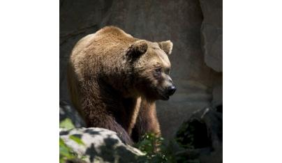 Výskyt medveďov na Slovensku