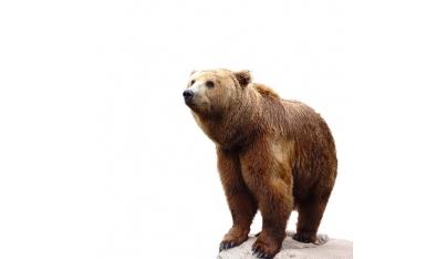 Človek v obkľúčení medveďov?