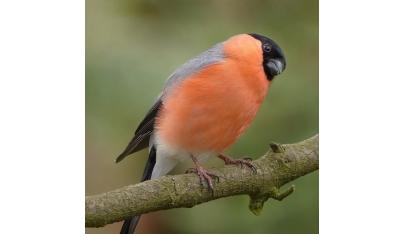 Vtáctvo našich lesov, časť 1