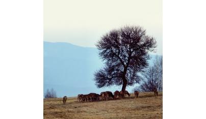 Etológia jelenej zveri